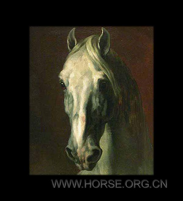 白色马头.jpg